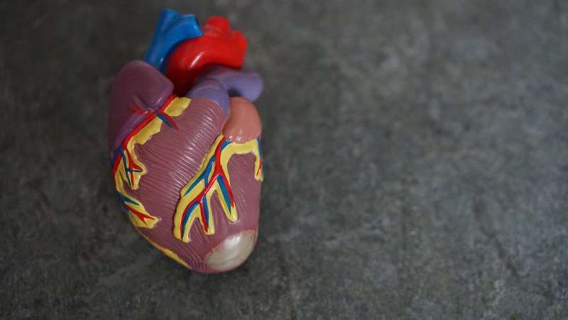 Iron release may contribute to cell death in heart failure